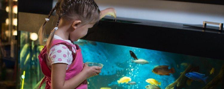 Para que el agua esté limpia, hay que alimentar a los peces con moderación