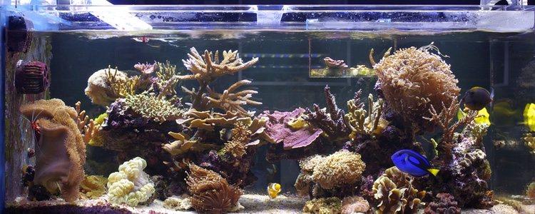 Se pueden colocar plantas vivas para limpiar el tanque