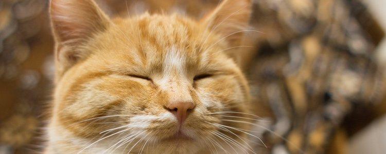 Acude al veterinario si piensas que tu mascota padece estrabismo