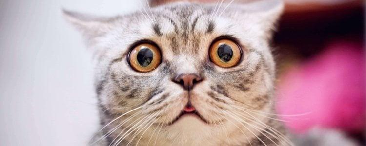 Vacuna y desparasita a tu gato