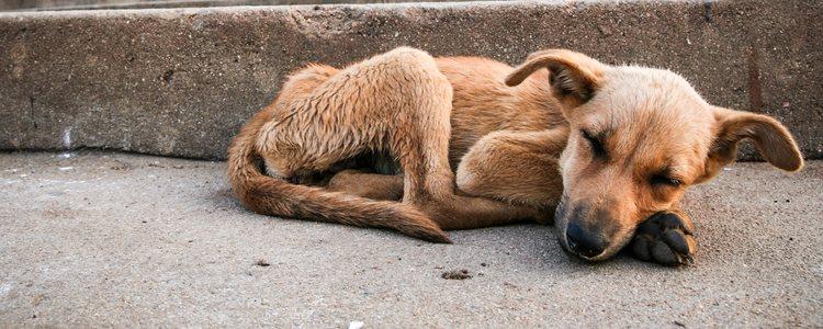 Si tu mascota pierde más de 10% de su peso habitual tendrás que llevarlo al veterinario
