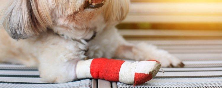 Para curar bolsas de pus en perros es recomendable agua y sal