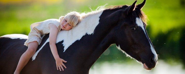 En cuanto a revisiones médicas de caballos, el precio oscila por los 500€