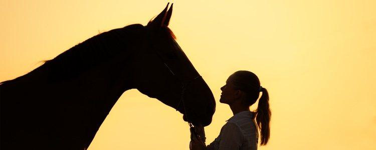 Los gastos en hospedar un caballo ronda los 100€ al mes