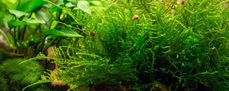 Hay plantas acuáticas que son capaces de crear flores