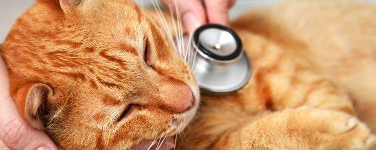 Los gatos tienen que recibir tratamiento preventivo para no desarrollar parásitos internos