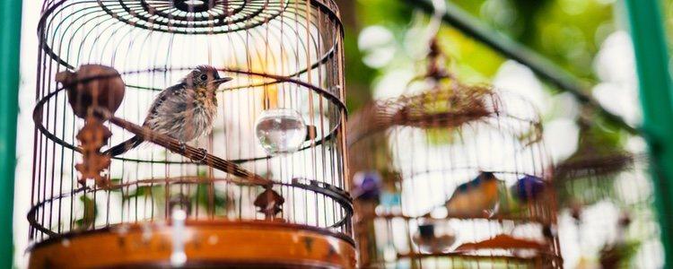 Hay diferentes trucos para adaptar la jaula de tu ave al invierno