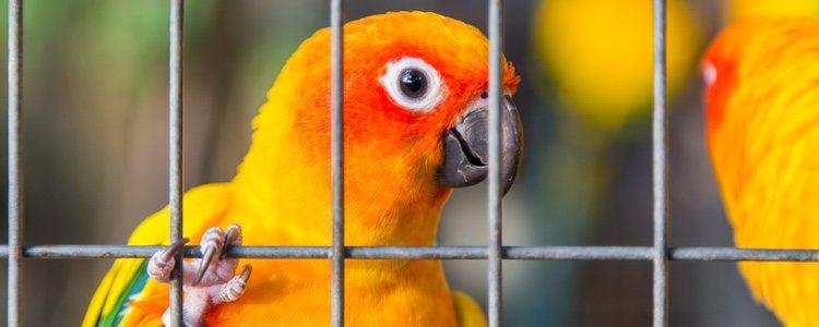 Hay que saber si el ave pertenece a alguna de las especies más frioleras
