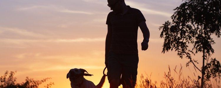 El paseo, fundamental para la raza de perro Cavachón