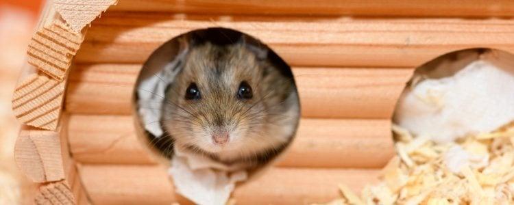 Домик внутри клетки поможет защитить животное от холода.