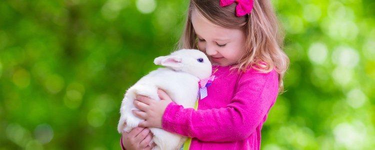 Antes de coger un conejo como mascota hay que valorar sus gastos