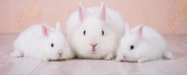 Existen diferentes tipos de conejo, por lo que hay que informarse al buscar el indicado