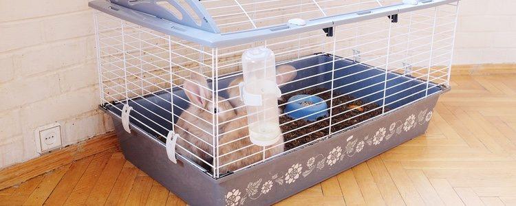 La jaula deber ser adecuada para que el conejo esté cómodo