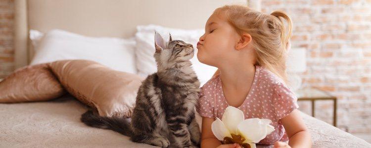 Acariciar a un gato nos ayuda a reducir la hormona causante del estrés