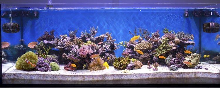 El aquascaping se basa en decorar con plantas acuáticas para formar un jardín submarino