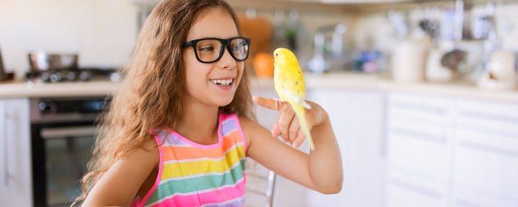 La intoxicación en los pájaros sueltos es muy común