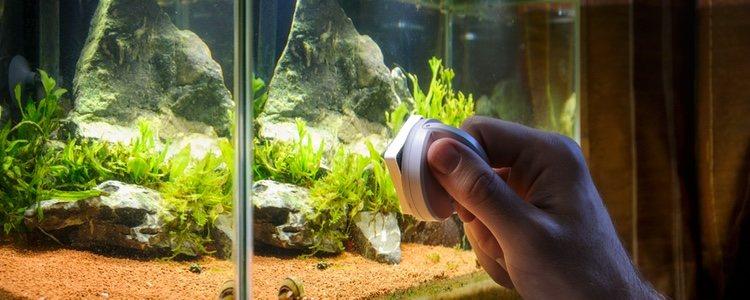 El filtro de un acuario no ayuda a limpiar en totalidad