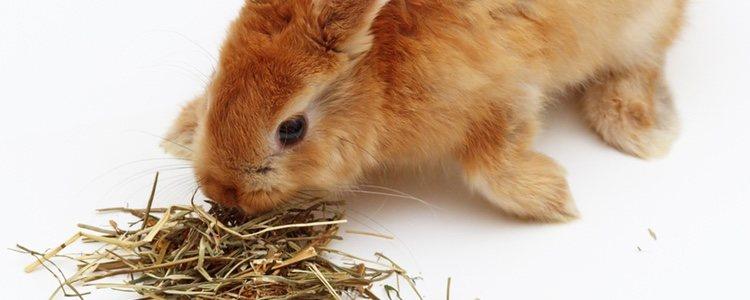 Hay distintos lugares donde comprar el mejor heno para el conejo