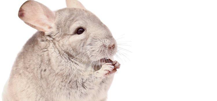 Los parásitos intestinales pueden producirle problema a tu animalito