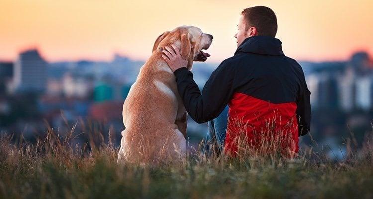 La raza del perro también es importante a la hora de elegir