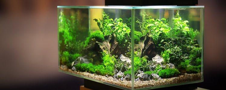Es recomendable que se utilicen lámparas con halógeno para acuarios grandes
