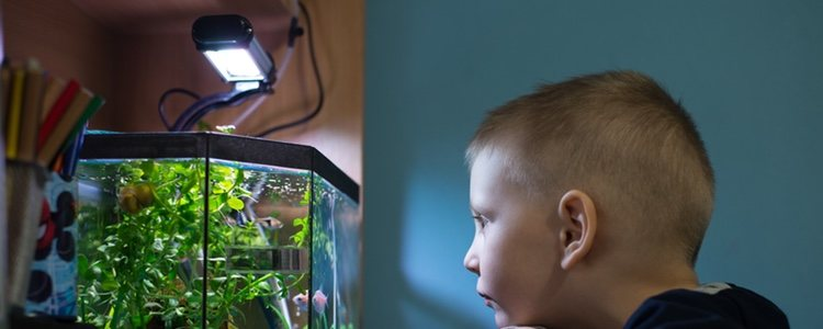 Son muy usadas porque se adaptan a todo tipo de acuarios