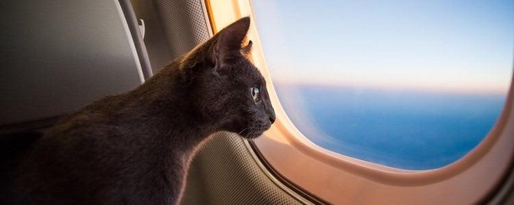Путешествовать с домашним животным непросто, и вы должны учитывать некоторые моменты