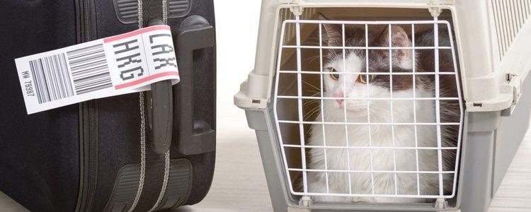 Вы должны учитывать разные способы перевозки кошки.