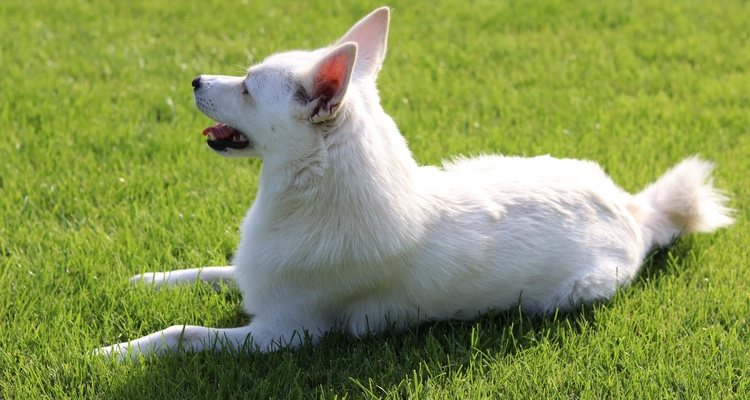 Es un perro destinado a vivir al aire libre asi que siempre tiene muchas ganas de salir de paseo