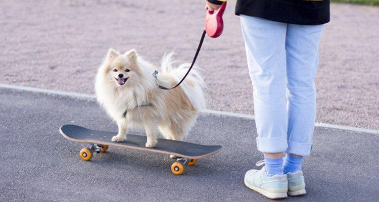 Es importante enseñar a tu perro a pasear junto a ti