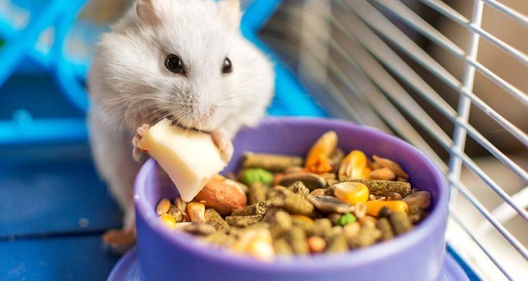 El pienso basado en frutos secos y semillas presenta ciertas carencias de nutrición
