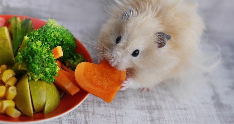 La introducción de frutas y verduras en la alimentación del hámster tiene que ser poco a poco