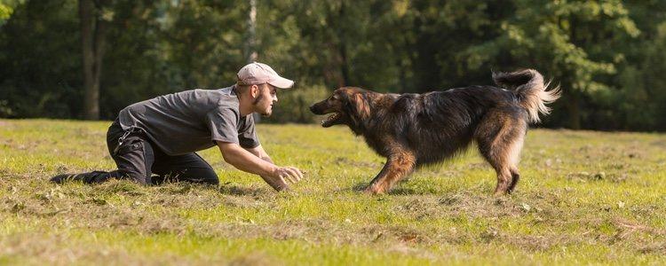 Para ser un auténtico adiestrador canino se necesita hacer un curso que este homologado