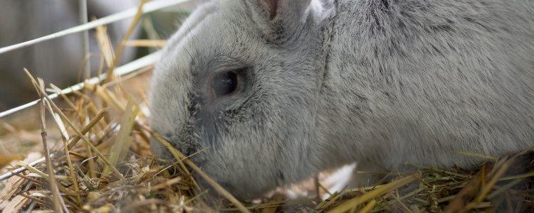 La jaula debe ser el primer accesorio a tener en cuenta para un conejo