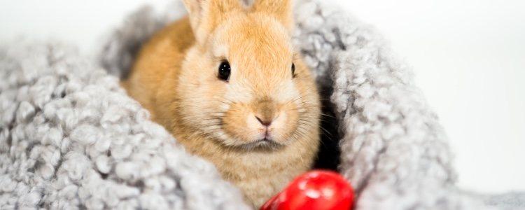 Un cama puede ser buena opción para favorecer el descanso de un conejo
