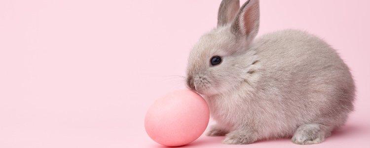 Algún capricho puede ser interesante para entretener a un conejo
