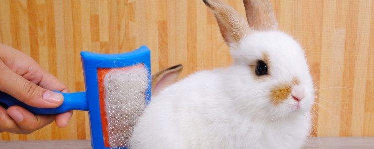 El cepillo es un accesorio muy importante cuando se tiene un conejo de mascota