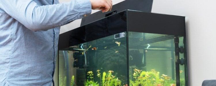 Para darle de comer a los peces hay que simular que están en su estado natural
