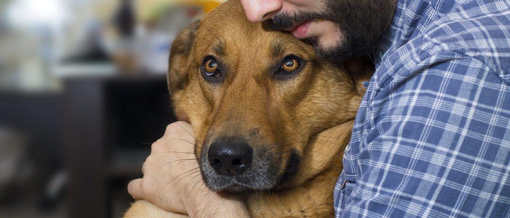 Hipotermia en perros: cómo detectarla y ponerle solución
