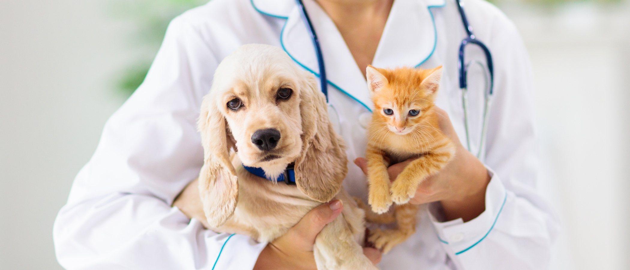 Curar quemaduras en perros y gatos: trucos y consejos