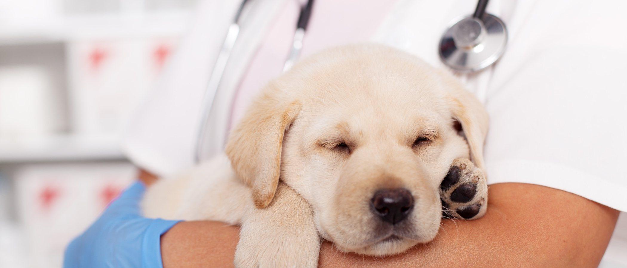 Coronavirus en perros: todo lo que debes saber