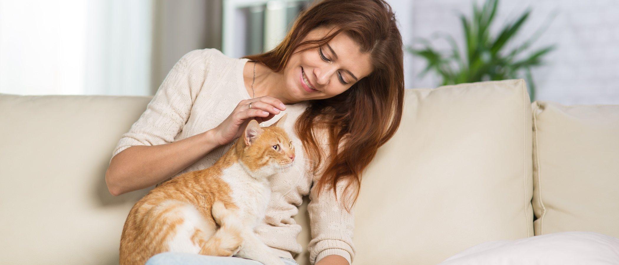 Adoptar a un gato adulto: ventajas y desventajas