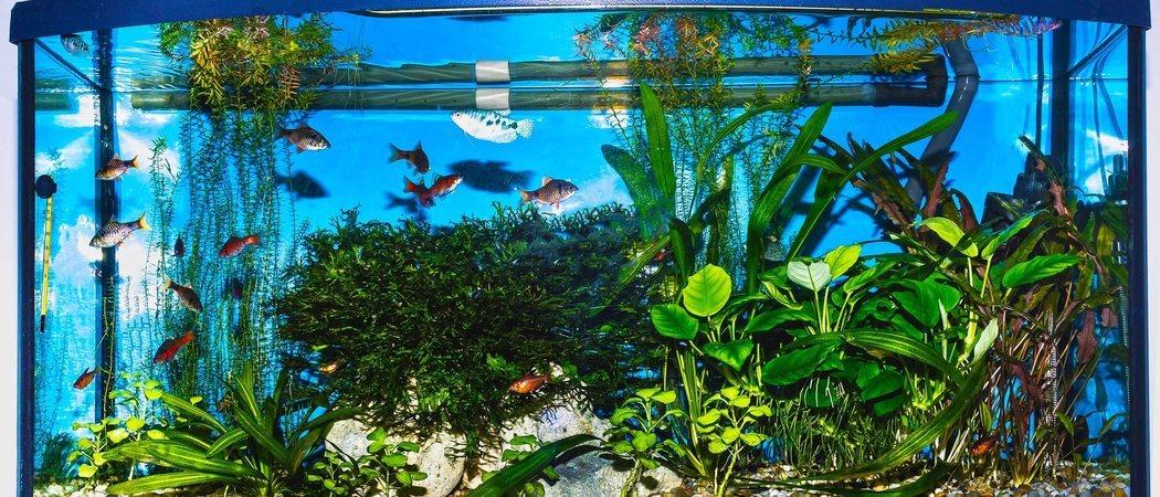 Aireador o bomba de aire para acuario: lo que debes saber