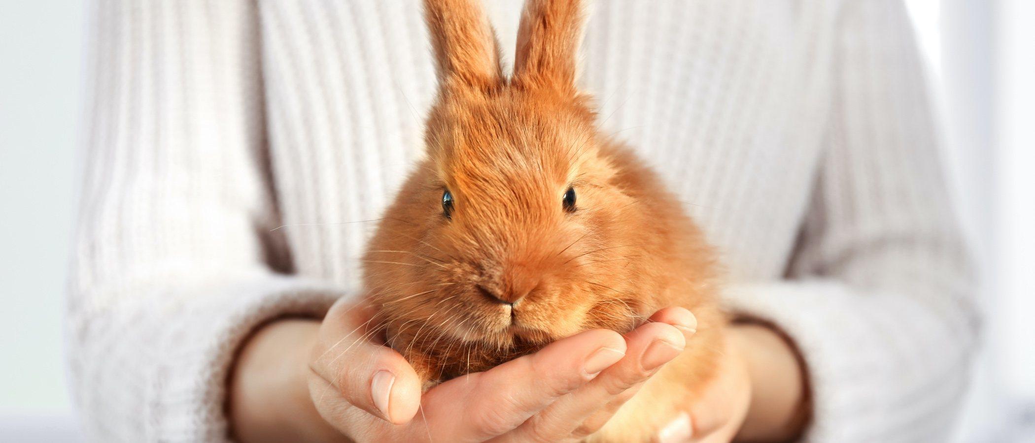 Mi conejo se ha arrancado una uña, ¿qué puedo hacer?