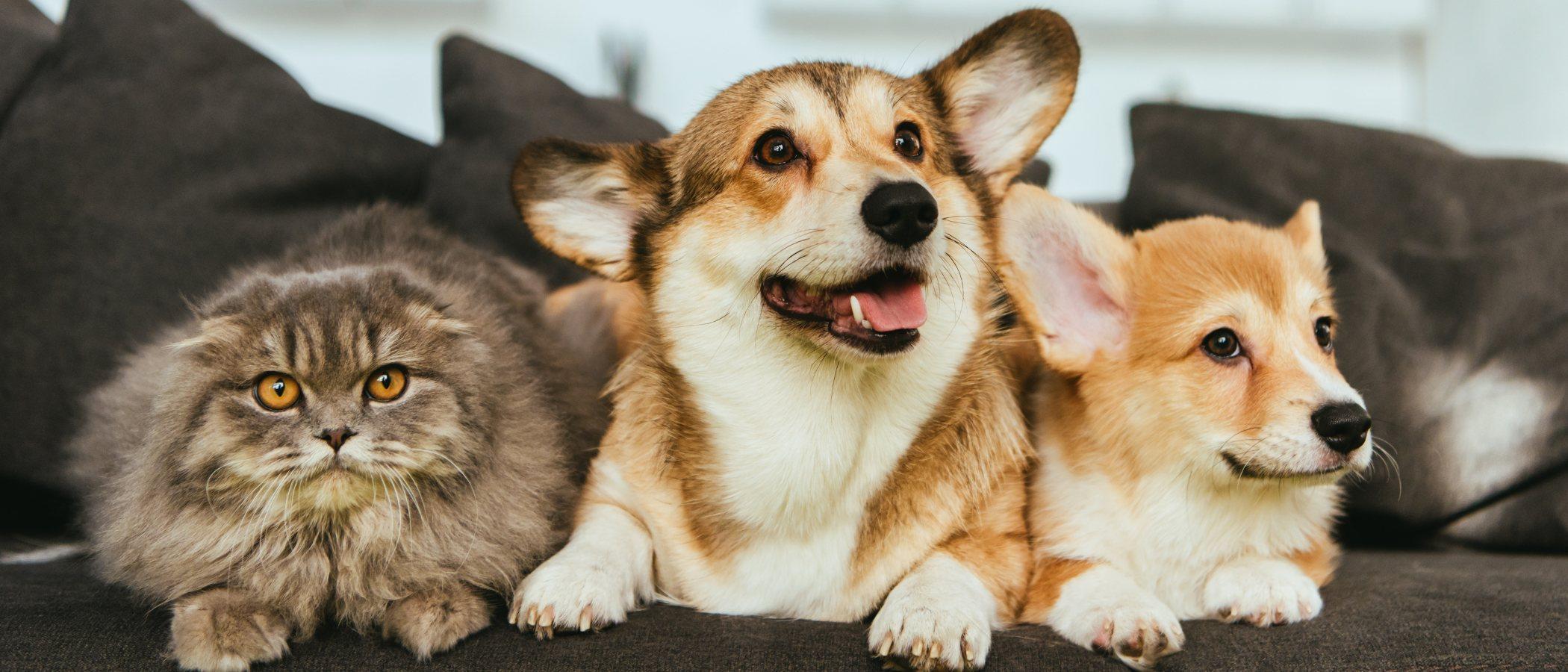 Beneficios de tener una mascota en casa durante la cuarentena