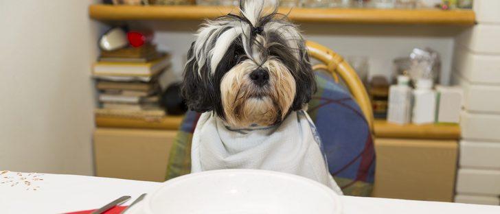 Cómo alimentar a un cachorro de perro recién nacido