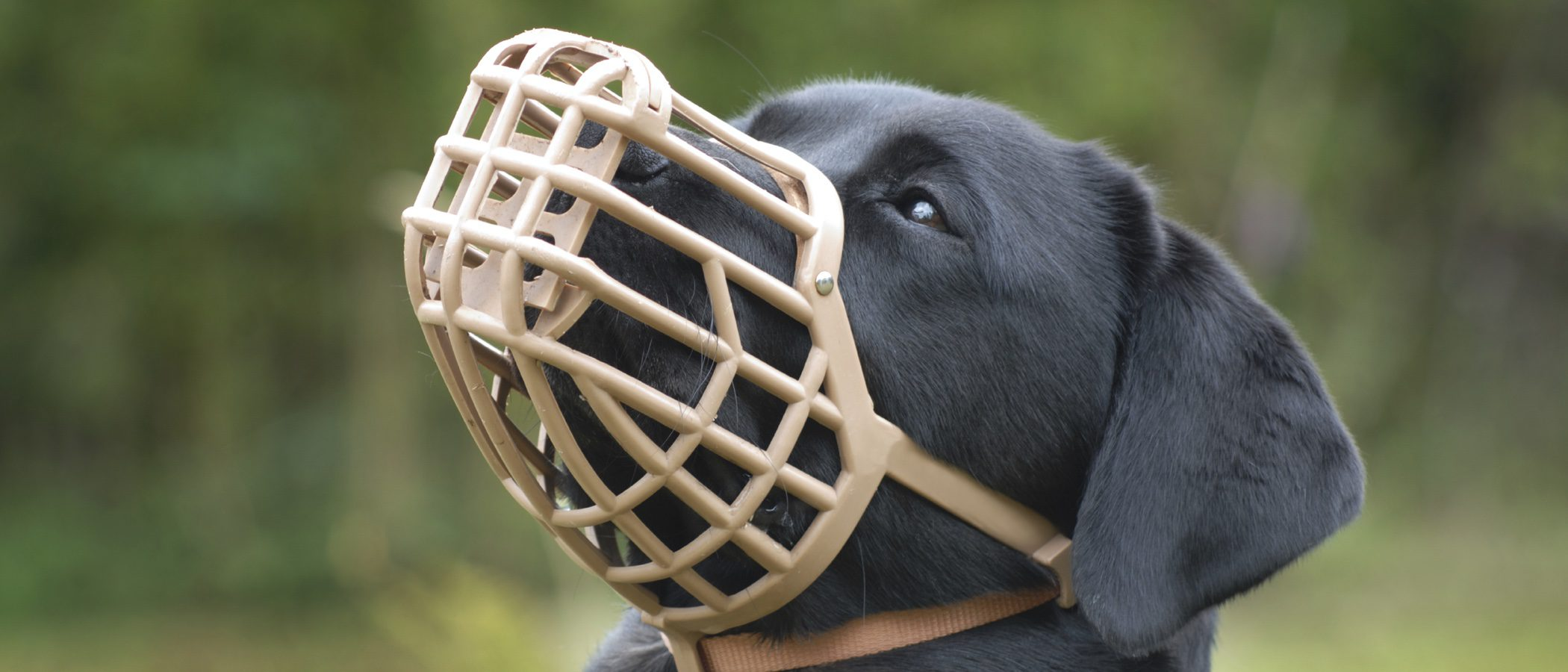 Cuándo poner un bozal a un perro