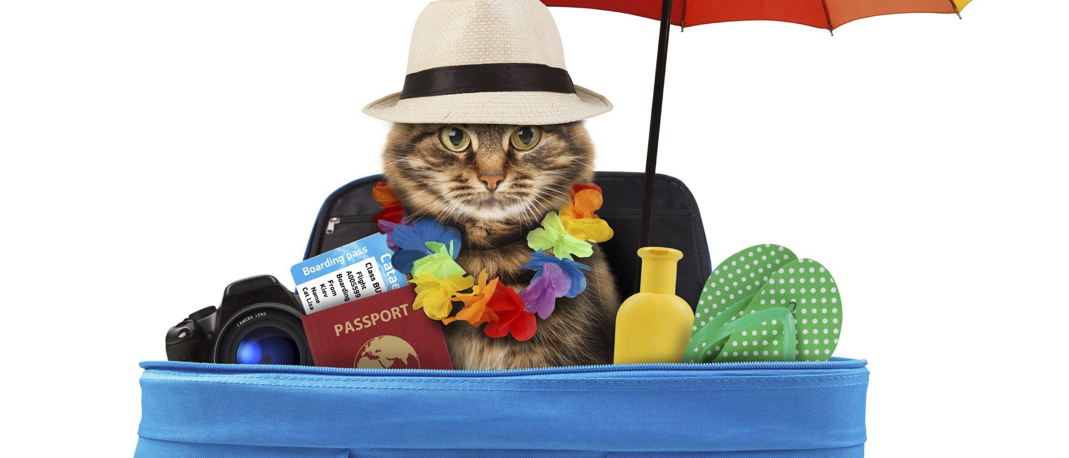 Qué hacer con nuestras mascotas cuando salimos de vacaciones