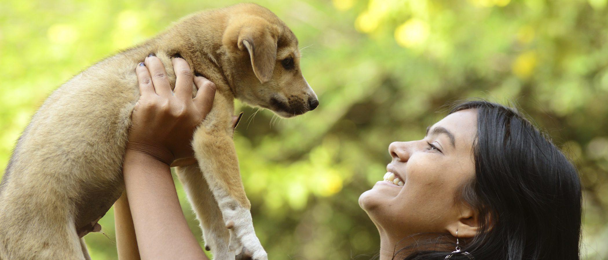 Consejos a la hora de adoptar a un perro