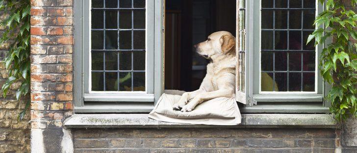 Qué comprar antes de traer un perro a casa